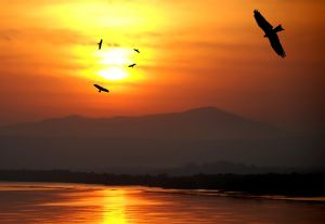 Vulture´s Sunset?